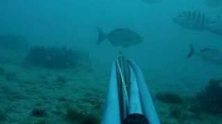 OMAR - pesca sub - a mais seletiva de todas!