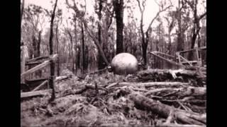 Abandoned Australian Farm Machinery - Sunshine Combine Harvester, Horse Carts, Thatched Sheds