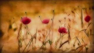 Indian Summer.wmv