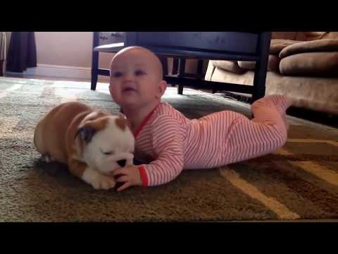 Funniest Dog Vine Compilation Ever 2019 Try not to Laugh!
