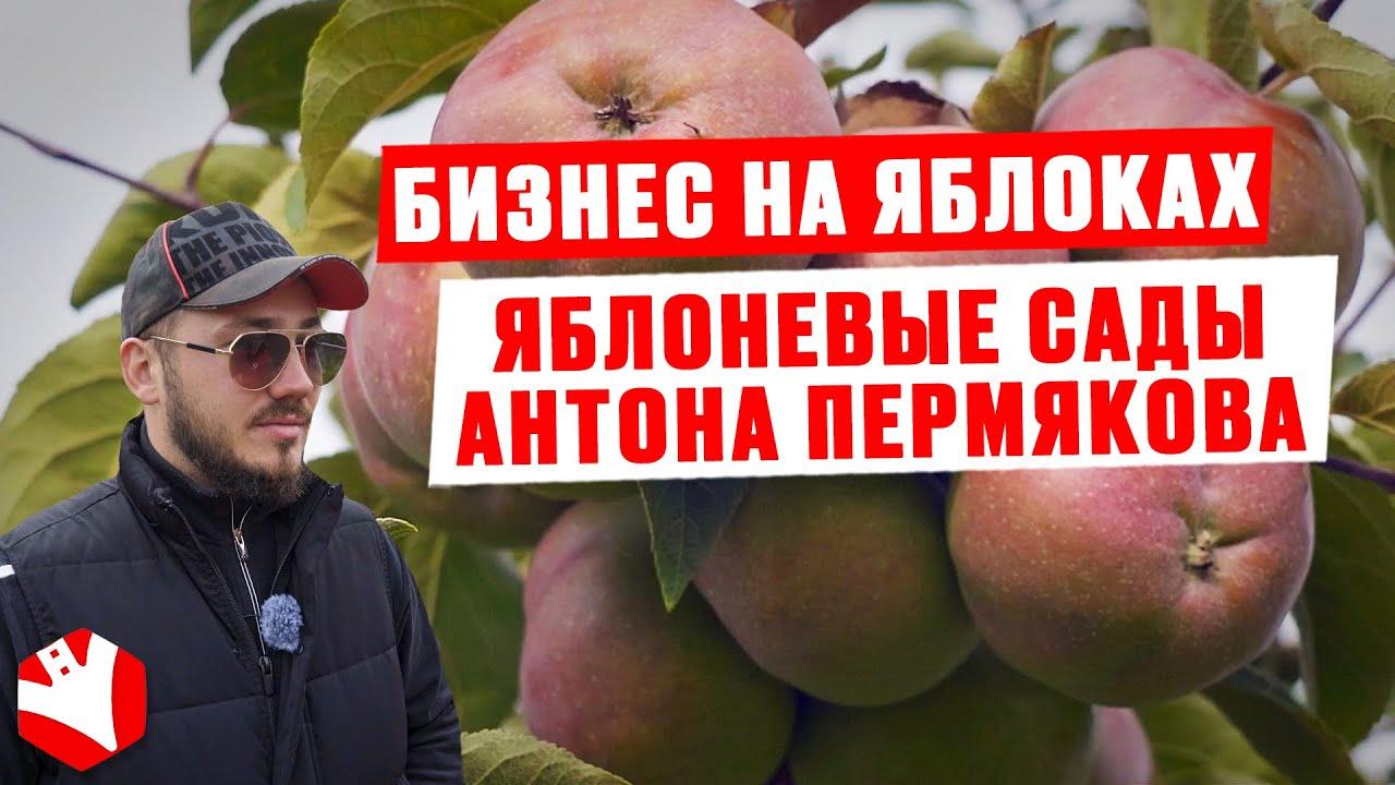 Бизнес на яблоках   Яблоневые сады Антона Пермякова   КУЛЬТИВАТОР
