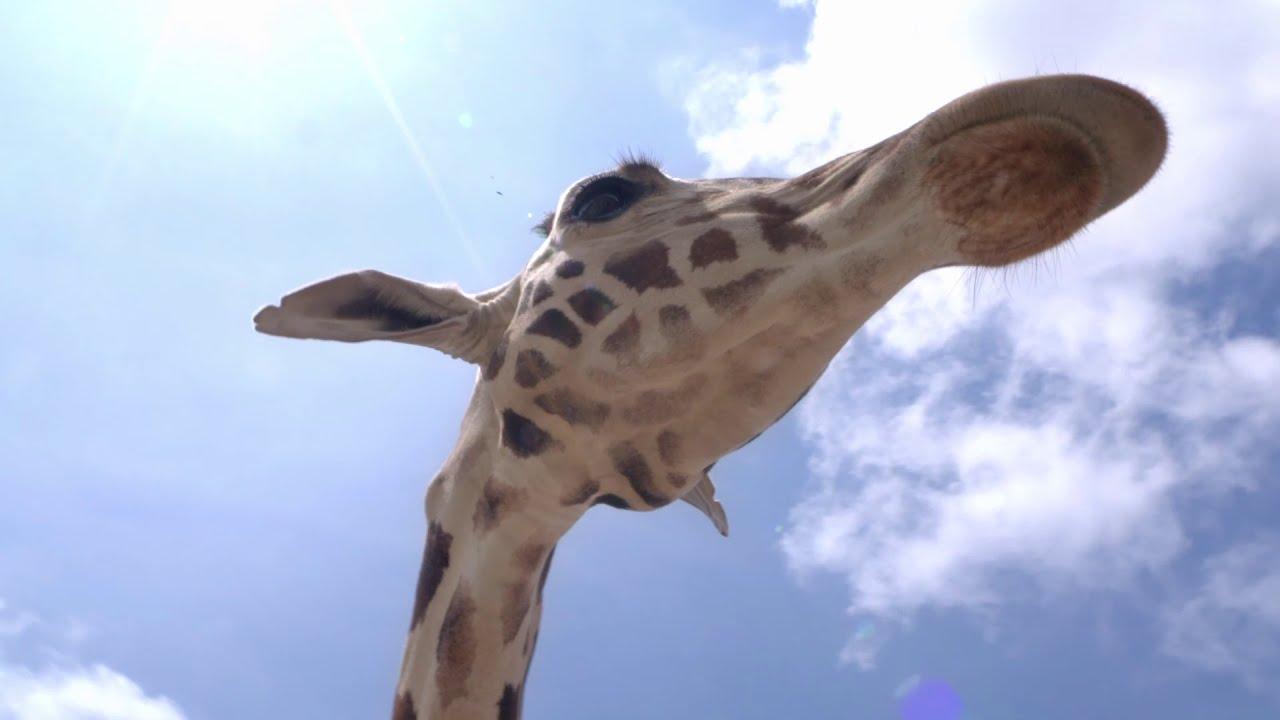 Safari Seguro Para Toda la Familia en Africam Safari