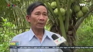 18/05/2017 - Nhân rộng mô hình trồng dừa sáp ở tỉnh Trà Vinh -  trên VTV9