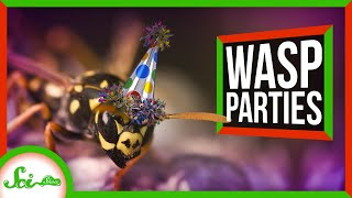 These Wasps Throw Awesome Parties