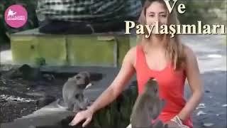 Sapık maymun kürtçe dublaj gülmek garanti 😭😭😭