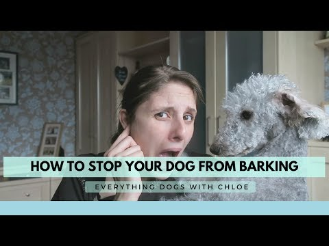 how-to-stop-my-dog-from-barking-at-everything---how-to-stop-my-dog-barking