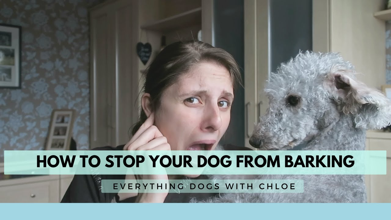 How To Stop My Dog From Barking At Everything How To