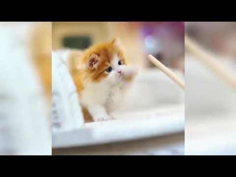 🐹 Cute Cats 🐹