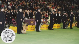 Remembering the Four-Legged Heroes of 9/11