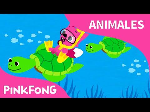Bajo el Mar   Animales   PINKFONG Canciones Infantiles