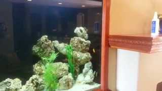Fish By Design 200 Gallon Freshwater Aquarium
