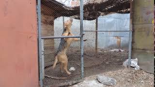 Собаки содержатся на улице и мешают жителям соседних домов в Бердске