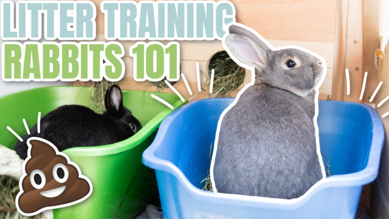 8 Steps to Litter Training Your Rabbit   Farm Animal Report