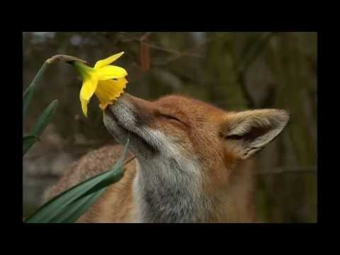 Картинки цветы, весна, розовые!