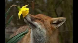 Цветы и животные. Картинки с животными и природой