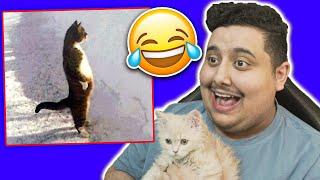 شغلت مقاطع فيديو مضحكة للقطوه 😸!! ( شوفوا ردة فعلها 😂💔)