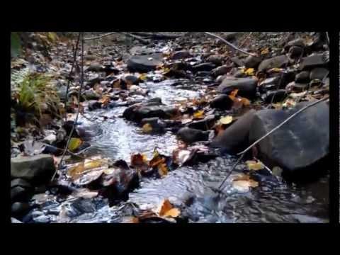 Binghamton Nature Preserve (Binghamton University) - Time Lapse Tour