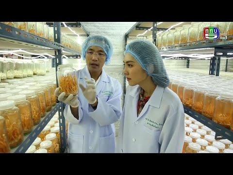 ฟาร์มเห็ดถั่งเช่า ACX Herb Cordyceps Farm จ.ปราจีนบุรี คุณเอกสิทธิ์ ทรัพย์เจริญ ไดอารี ช่อง 5