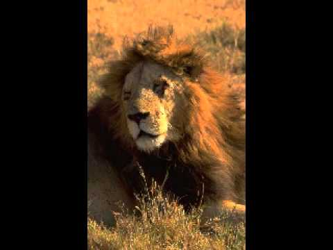 Circle of Life  Carmen Twillie & Lebo M The Lion King Special mix