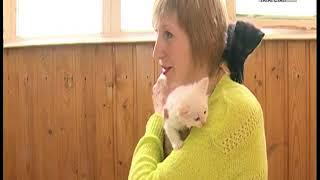 Челнинских кошек отправляют в Германию