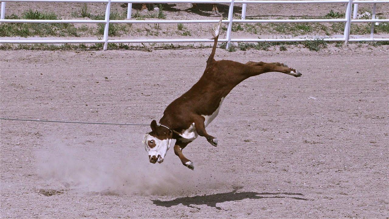 Rodeo Roping - Cruelty Exposed - YouTube