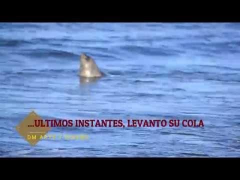 ELEFANTE MARINO URUGUAY BEACH