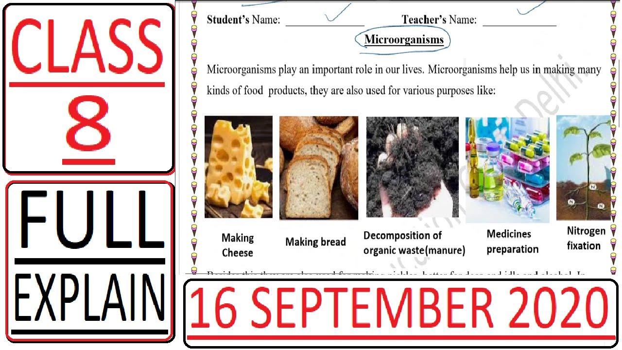 Worksheet 2 16 Sept 2020 - Class 8 - Microorganisms (Science) DOE CBSE  NCERT DELHI - YouTube [ 720 x 1280 Pixel ]