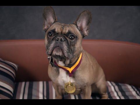Riley - French Bulldog - 5 Weeks Residential Dog Training