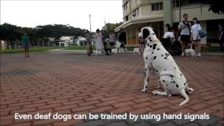 Basic Dog Training Class In Singapore