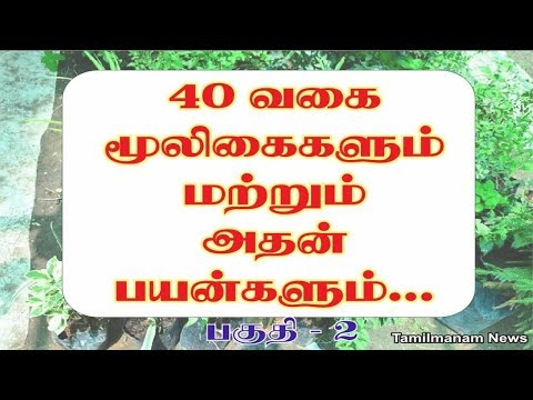 Herbs and their uses in tamil | 40 herbal plants and their