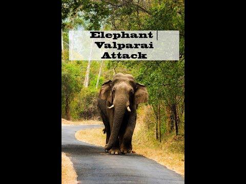 Elephant Attack   Valparai Forest
