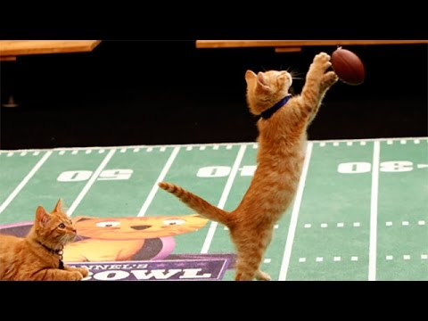 Thumbnail for Cat Video Kitten Bowl I - Behind the Scenes