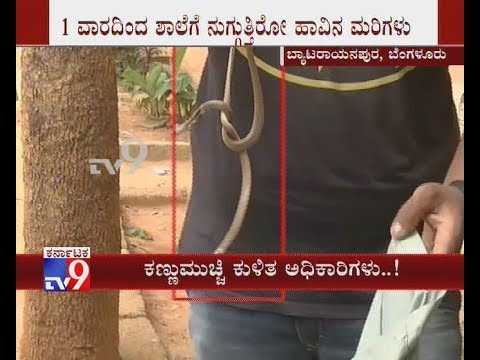Students Scared, as Snakelets Spotted All Around School in Bengaluru