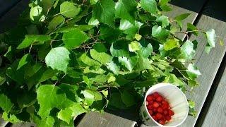 Saunaterapia - сауна по финским традициям