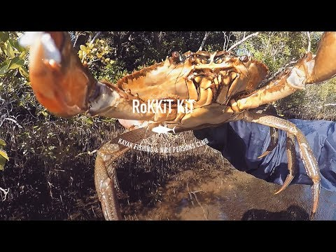 Mud Crabs from the Stand Up Paddle Board
