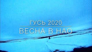 Охота на гуся в Ненецком АО весна 2020