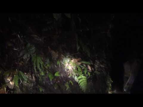 Costa Rica Night Tour