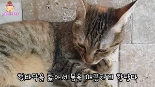 [Vol.2고양이]자연관찰시리즈-동물편ㅣ유아자연관찰동화…