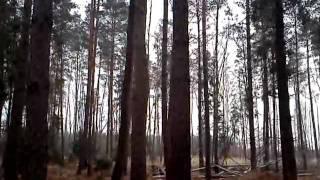 wariat w lesie brynica