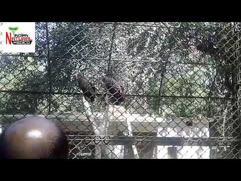 Zoo Video No.55