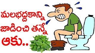 మలబద్దకం ఆకు | ఇలా చేస్తే మలబద్దకం అనేది ఇక ఉండదు || constipation Treatment | Health Tips Telugu