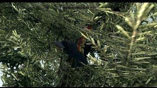 The Elder Scrolls V: Skyrim. Птичку жалко! Прохождение от SAFa