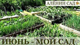 ИЮНЬ 2018 МОЙ САД и ОГОРОД / Garden