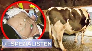 Aggressiver Bulle greift Jürgen an! | Birgit Maas | Die Spezialisten | SAT. TV