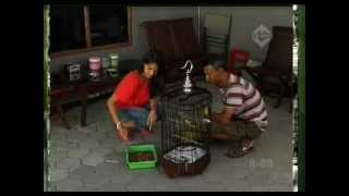 Bingkai Berita TransTV # Burung Pleci