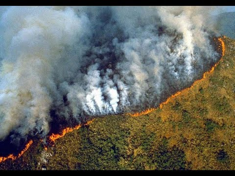 amazon-rain-forest-lungs-of-earth-up-in-flames-@-dangerous-levels-to-humanity-&-wildlife-august-2019