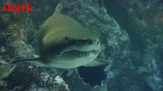 Bé học tên tiếng anh và tiếng kêu động vật, sinh vật biển
