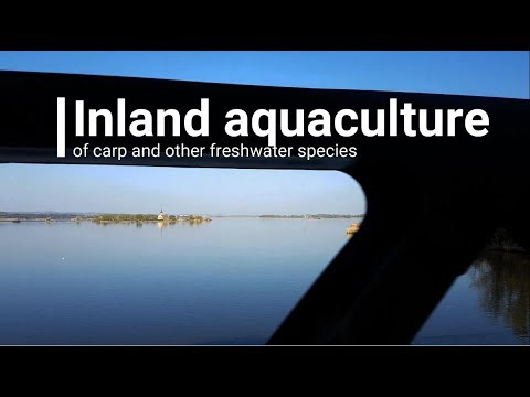 How The EU Helps Inland Aquaculture In Czechia