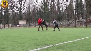 Doberman - Bodyguard ve Alan Koruma Eğitimi