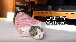 紙袋とねこ2。-Paper bag and Maru 2.-